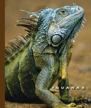 Iguanas by Sophie Lockwood