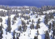 Mazama Ridge, Mount Rainier National Park, Sierra Club Boxed Holiday Cards PDF