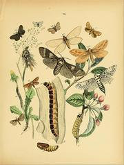European butterflies and moths by William Forsell Kirby