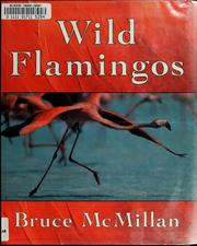Wild flamingos by Bruce McMillan