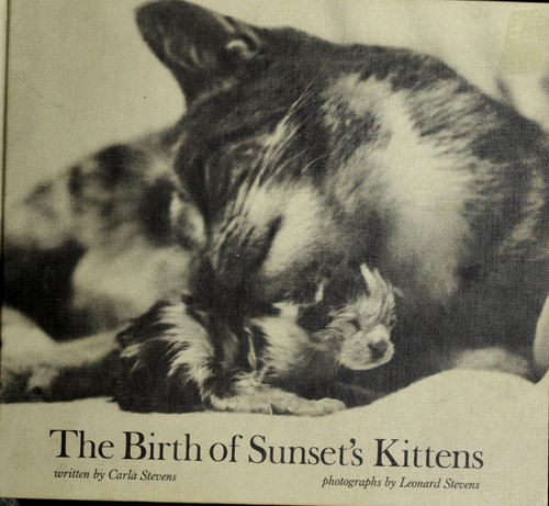 The birth of Sunset's kittens.