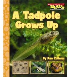 A tadpole grows up