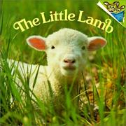 Cover of: Little Lamb by Judy Dunn
