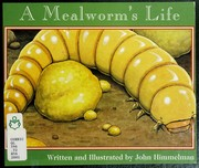 A Mealworm's Life