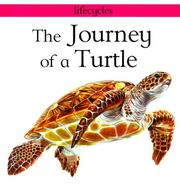 Cover of: The journey of a turtle | Carolyn Scrace