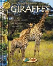 Amble through the expansive grassland of giraffes