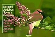 Cover of: National Audubon Society Pocket Guide to Familiar Birds: Eastern Region