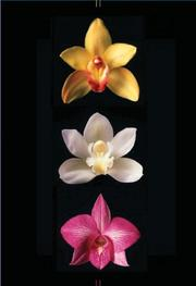 Cover of: Orchids Journal