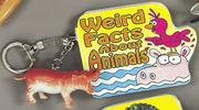 Cover of: Weird Facts About Animals