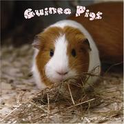 Cover of: Guinea Pigs 2008 Wall Calendars | Magnum Publications