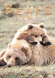 Cover of: Bears Box Set (Boxed Cards series)