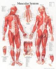 Cover of: Muscular System, Male | Scientific Publishing
