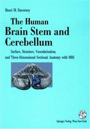 Cover of: The Human Brain Stem And Cerebellum