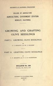 Growing and grafting olive seedlings by