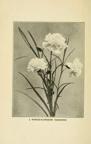Cover of: Pictorial practical carnation growing