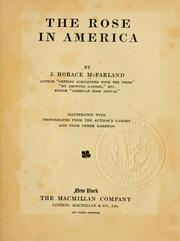 Cover of: The rose in America