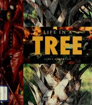 Cover of: Life in a tree