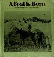 Cover of: A foal is born