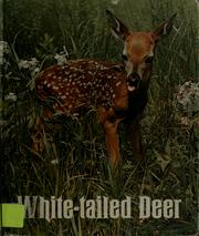 Cover of: White-tailed deer