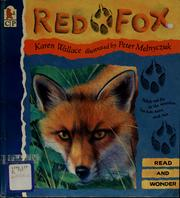 Cover of: Red fox