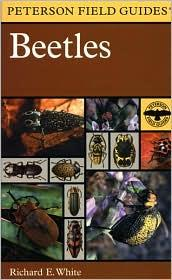 Cover of: A field guide to the beetles of North America