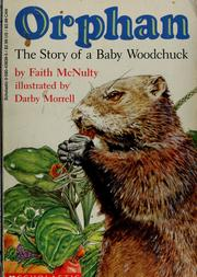 Cover of: Orphan: the story of a baby woodchuck
