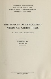 Cover of: The effects of desiccating winds on citrus trees