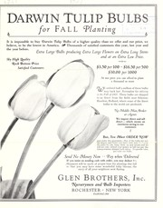 Cover of: Darwin tulip bulbs for fall planting | Glen Brothers