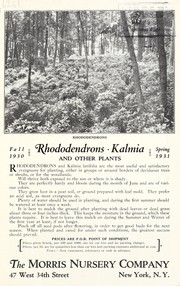 Rhododendrons, kalmia and other plants by Morris Nursery Co