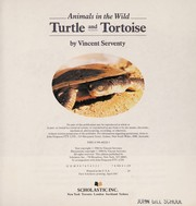 Cover of: Turtle and tortoise