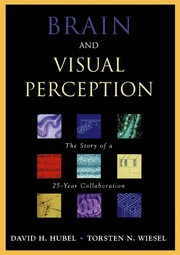 Brain and visual perception