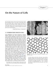 Cover of: Plant cell biology | Randy Wayne