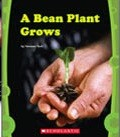 Cover of: A Bean Plant Grows