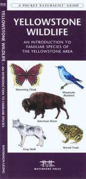 Cover of: Yellowstone Wildlife | James Kavanagh
