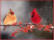 Cover of: Christmas Cardinals Holiday Cards by Galison/Mudpuppy