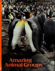 Cover of: Amazing animal groups by Suzanne Venino